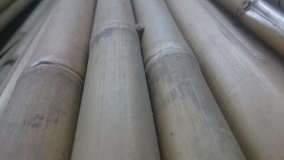 Bambus 120 10-12